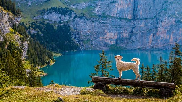 single mit hund urlaub